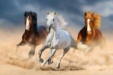 1277V -USA Pferde Cowboys Wandtapete Dekotapete VLIES Fototapete-WILDER WESTEN-