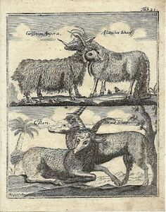 Antique-engraving-Goats-plate-21