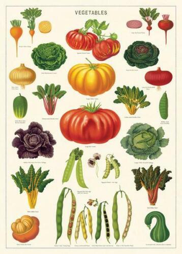 Poster Vegetables Decorative Paper Sheet Cavallini /& Co Wrap
