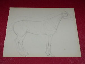 Horse-Riding-Horses-Horses-Drawing-Original-Antique-Pencil-Lead-Mine-8