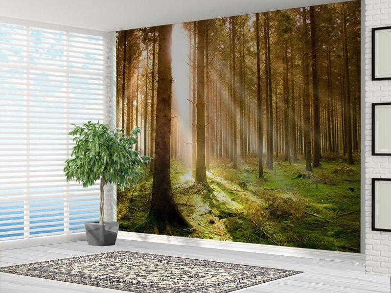 Forest At Dawn Wald Tapete Foto Wandbild (3801688) Wald