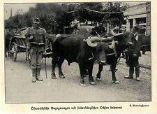 1914 Vormarsch auf Iwangorod * Österreichische Bagagewagen  *  WW1