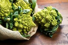 Seeds Broccoli Romanesco Vegetable Organic Heirloom Russian Ukraine
