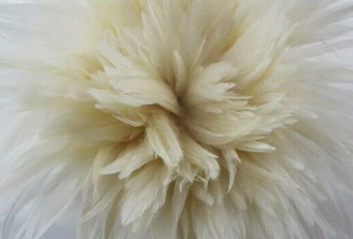 BULK 50pcs Off White Beige Rooster Feathers 5-10cm DIY Art Craft Dream Catcher