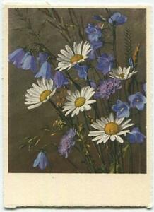 VINTAGE BLUE GENETIAN FLOWERS OX EYED  DAISY LITHOGRAPH SWITZERLAND COLOR PRINT
