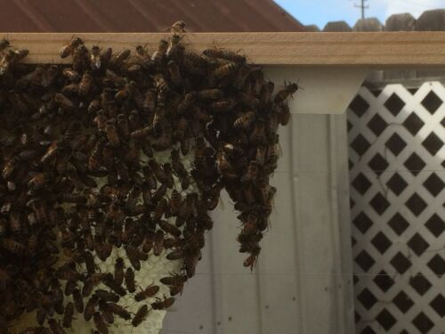 """Medium Super 6 1//4/"""" Plastic Bee frame Ends 80 pc 100 Spehar Starter Strips"""