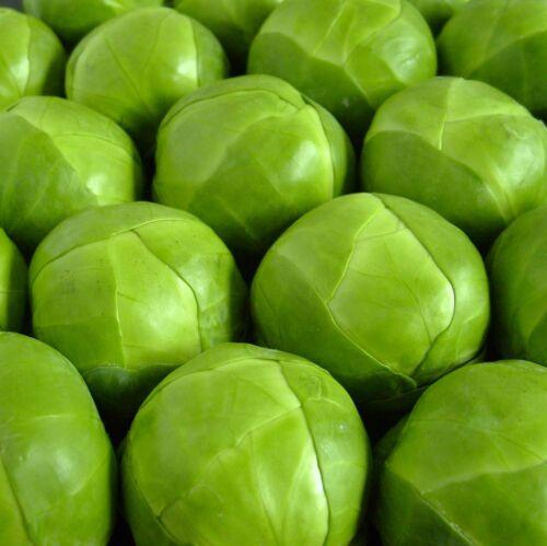 40 graines hybride .. pour une performance professionnelle Chou de Bruxelles-Maximus