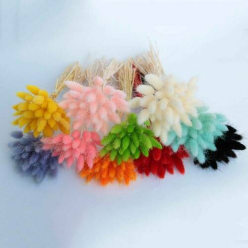 30X Dried Flowers Bouquet Rabbit Tail Grass Real Flower Weddings Home Decors
