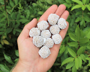images of desert rose seeds