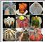 20-mixed-seeds-Astrophytum-succulents-home-garden-bonsai-Free-shipping thumbnail 1