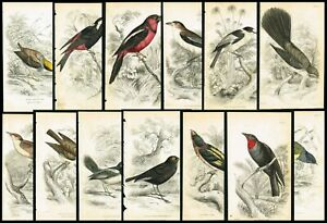 1853-Flycatchers-Exotic-Birds-Lot-of-13-Hand-Colored-Antique-Ornithology-Prints