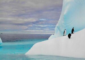 A1-Penguin-Iceberg-Antarctica-Nature-Poster-Art-Print-60x90cm-180gsm-Gift-13281