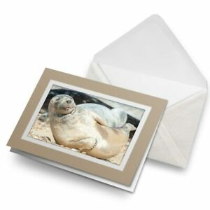 Greetings-Card-Biege-Cute-Grey-Seal-Pup-Sunbathing-3648