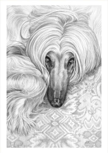 AFGHAN HOUND Giclee pencil dog print by Neil Paterson
