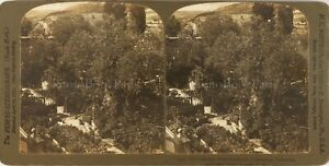 Gerusalemme Gethsemane Le Jardins, Foto Stereo Vintage Analogica PL62L12