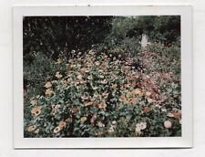 PHOTO COULEUR Polaroïd - Fleurs Plantes Arbre Jardin - Vers 1960