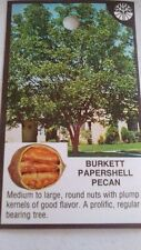 BURKETT PAPERSHELL PECAN TREE Shade Trees Live Healthy Plant Large Pecans Nuts