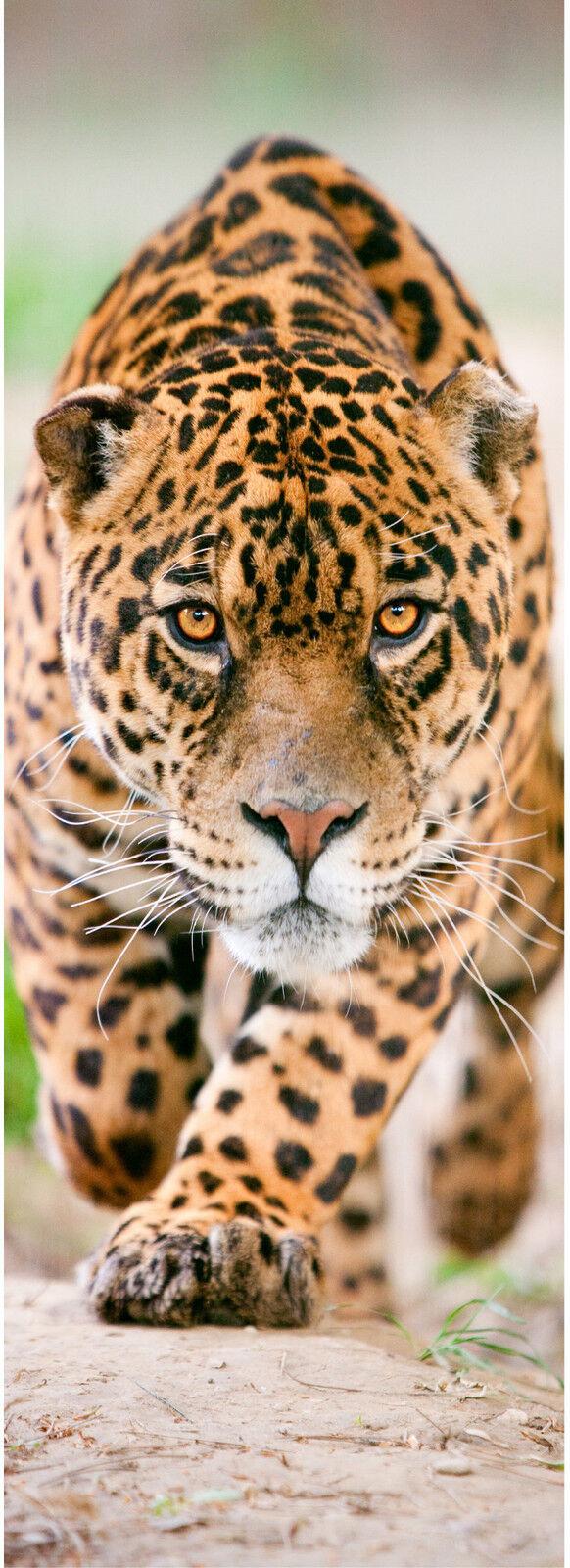 Carta dipinto per porta inganna l'occhio decocrazione Jaguar ref ref ref 527 d8c2ae