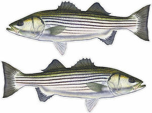 Striped bass genetic variability