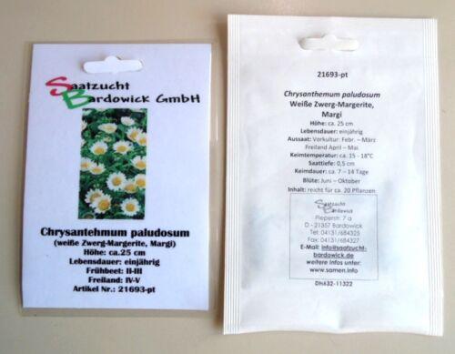 Weiße Zwerg-Margerite Margi Chrysanthemum paludosum Samen Saatgut Saat Qualität