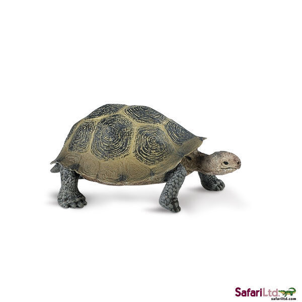 Desert Tortoise by Safari Ltd/wild animals
