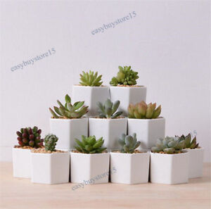 Details about 10x Cute Ceramic Succulent Planter Miniature Flower Pots  Garden Planter Pot