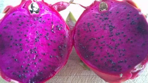 4 Typ Seltene Zwerg Drachenfrucht Reife Stecklinge Bereit To Grow Leichter