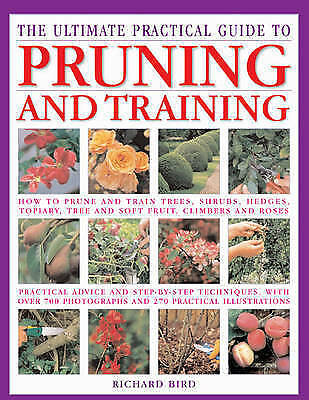 The Ultimate Practical Guide to Pruning and Training: How to Prune and-ExLibrary