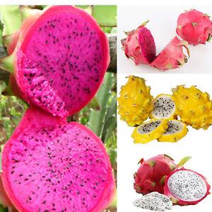 200-seeds-4kinds-mix-pitaya-dragon-fruit-yellow-Seed-Fragrant-cactus-rare-exotic