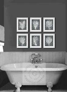 Grey Sea Corals Beach Wall Art Set Of 6 Art Prints Beach Bathroom Coastal Decor Ebay