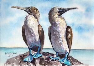 Blue-Footed-Boobies-original-watercolor-bird-painting-animal-pet-ocean-sea-art