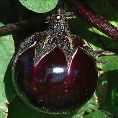 Rare Aubergine RONDE DE VALENCE 10 or 20 French Eggplant Heirloom Organic Seeds