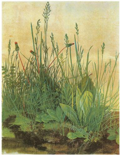 Large Piece of Turf Art Canvas//Poster Print A3//A2//A1 1503 Durer