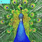 Peacocks Wall Calendar 2017 by Inc BrownTrout Publishers 9781783617661
