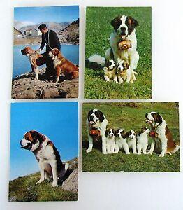 Schweiz-Postkarten-Lot-4x-mit-Hund-Dog-Bernhardiner-St-Bernhard-Chien-Barry