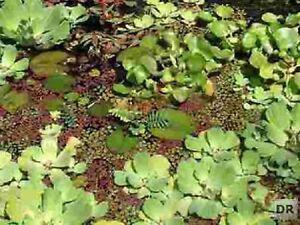 anti algen set f r teich wasserpflanzen gartenteich