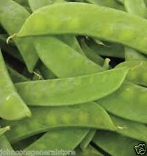 2017 Heirloom Mammoth Melting Sugar Snow Pea Seed 1/4 lb  approximately 475 seed