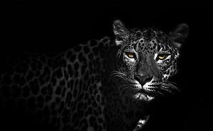 framed print snow leopard black white picture poster animal art cat tiger ebay. Black Bedroom Furniture Sets. Home Design Ideas