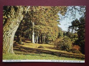 POSTCARD DEVON KILLERTON IN THE AUTUMN - Tadley, United Kingdom - POSTCARD DEVON KILLERTON IN THE AUTUMN - Tadley, United Kingdom