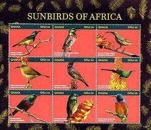 Ghana 2015 MNH Sunbirds of Africa 9v M/S Birds Marico Collared Amethyst Sunbird