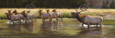 ELK ART PRINT - Ladies Man by Bonnie Marris Antlers Wildlife River Poster 10x30