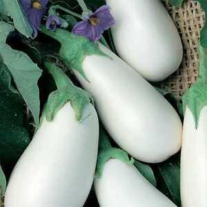 600-Semillas-de-039-Berenjena-Blanco-Huerto-Verduras-Plantas