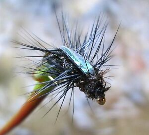 Gilchrist mouches. Sec mouches Flashback Beetle. (Coccinelle) 4 Pièce D'une taille-nfliegen FLASHBACK BEETLE. (Käfer) 4 Stück von einer Gr.afficher le titre d`origine hpQsqSb0-07135527-83921693