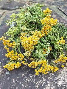 """Dried Tansy, Dried Wildflowers, Yellow Flowers, Dried Flower Bouquet, 20-24"""""""