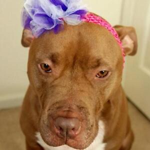 Dogs Headband