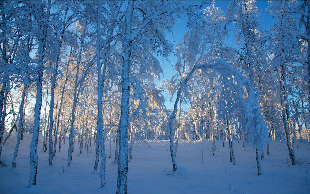 3D Tree forest snow winter Wallpaper Decal Dercor Home Kids Nursery Mural  Home