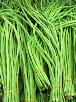 Ramai Uri Borboti বরবোটি  8 Seeds Bangladeshi Seeds Lubi Uri Yard Long Bean