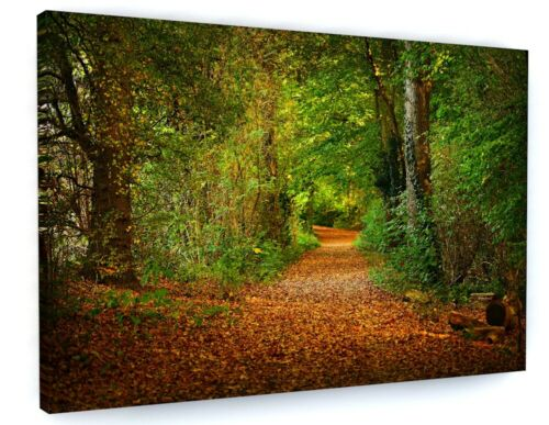 WOODLAND FOREST TREES CANVAS PICTURE PRINT WALL ART D40