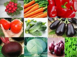 "(10 Psc.) Most Popular Vegetables ""garden#2"" From Ukraine"