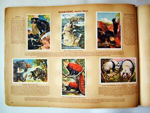 Wunder-der-Tierwelt-Sammelbilderalbum-200-Zigarettenbilder-komplett-1933